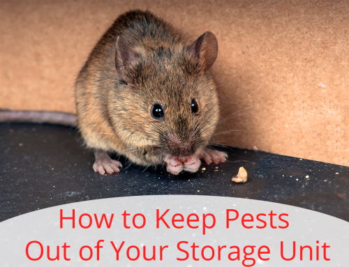 How to Keep Pests Out of Your Storage Unit